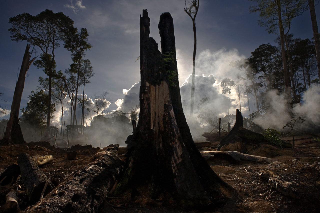 """""""Nella lotta contro gli incendi in Amazzonia conta l'impegno di tutti noi"""""""